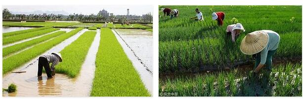 China Agriculture